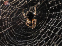 Sky creates 3D spiders film