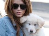 Miley Cyrus out and about in West Hollywood with her pet Maltese Maltipoo puppy