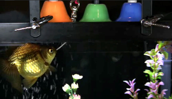 Fish plays a glockenspiel