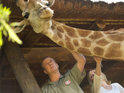 A giraffe from ITV1's Wild at Heart is rescued after falling into a swimming pool.