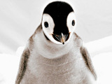 A baby penguin