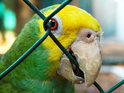 Parrot sings scary metal song 'Bodies' by band Drowning Pool.