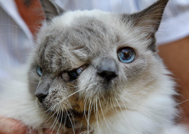 Frank and Louie the two-faced cat