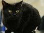 Black cat 'boarded' train in Southampton and held on for two hours till Cardiff.