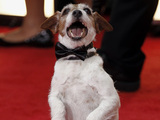 Uggie, the Artist, Golden Globes