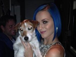 Katy Perry, uggie, Oscars 2012