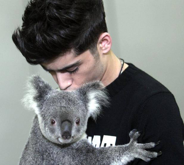 Zayn Malik, Koala