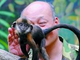 Monkey, Chinese zoo keeper
