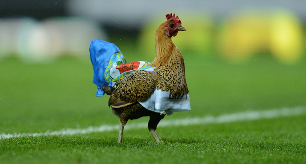 A chicken placed by protestors against the owners of the club walks on the pitch during Blackburn's English Premier League soccer match against Wigan at Ewood Park Stadium