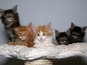 A man from Israel divorces his wife because she refused to part with her cats.