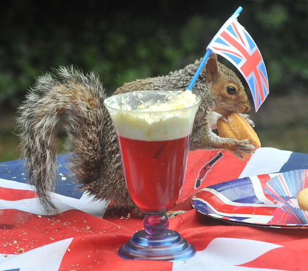 grey squirrel, Jubilee party, Hampshire