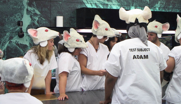 The rat lab task