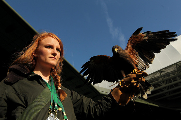 Rufus the Wimbledon hawk with owner and handler Imogen Davis