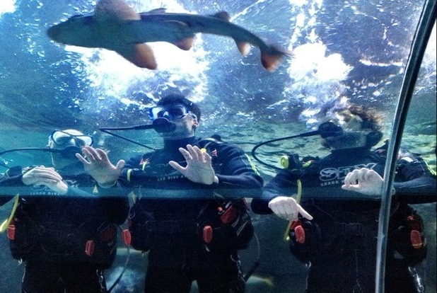 Max George, Jay McGuiness and Siva Kaneswaran of The Wanted swim with sharks.