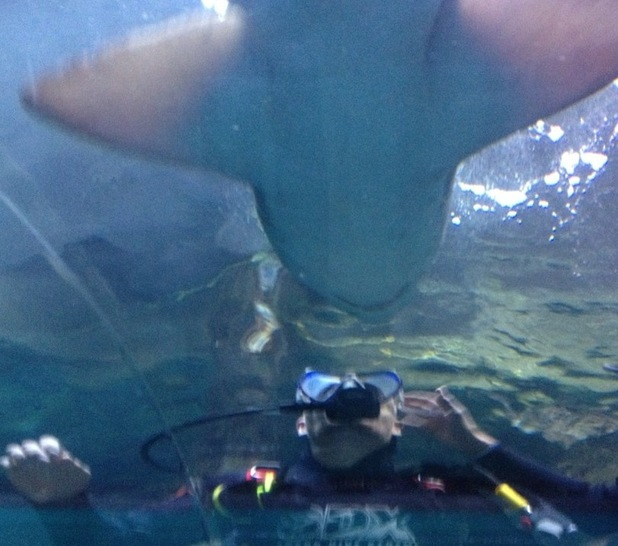 Max George of The Wanted swims with sharks.
