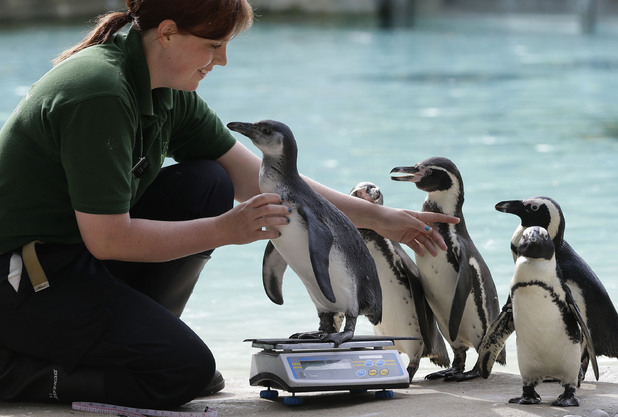 London Zoo's cute animals receive annual measurements
