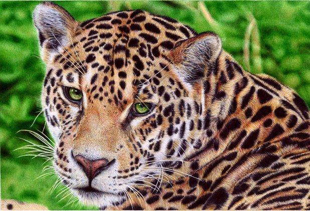 'Jaguar'