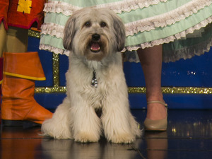 Ashleigh & Pudsey and Stephen Mulhern in 'Dick Whittington'.