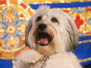 Pudsey in 'Dick Whittington'.