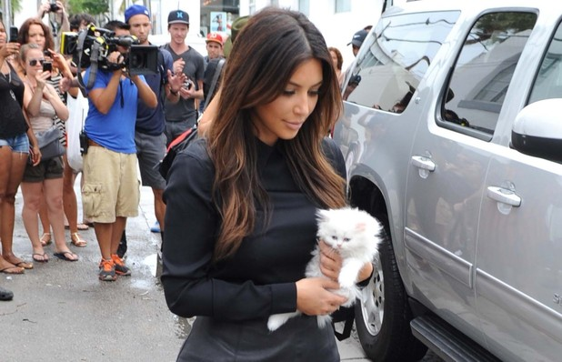 Kim Kardashian holds a white kitten
