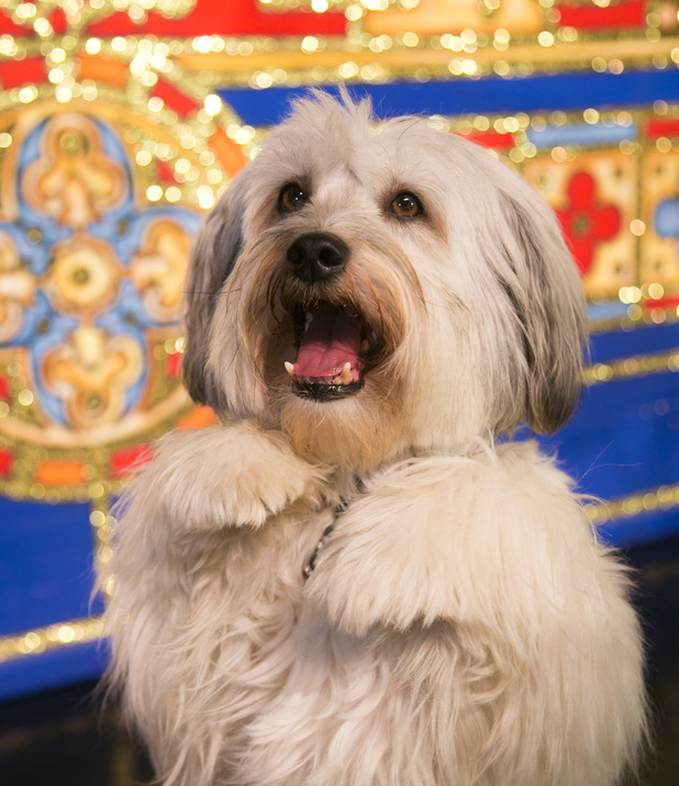 Pudsey in &#39;Dick Whittington&#39;. 