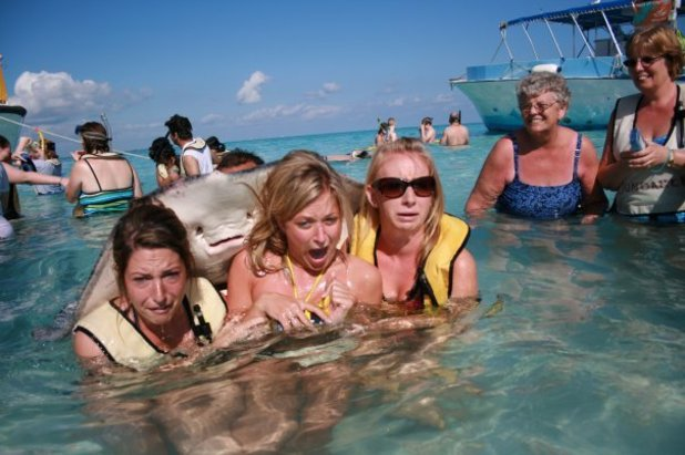 Stingray 'photobombs' swimmers