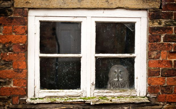 Gandalf the agoraphobic owl