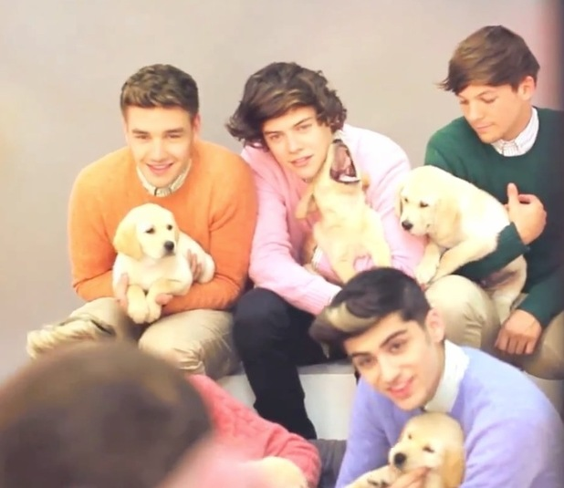 One Direction hold puppies, wear jumpers for Wonderland shoot.