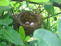 Birds are lining their nests with the butts to repel pests and keep warm.