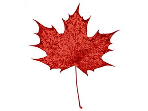 North American maple leaf