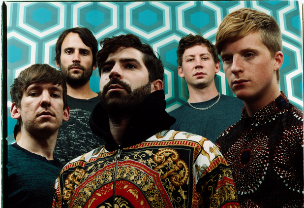 Foals (large)