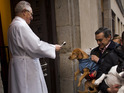 In celebration of Saint Anthony, owners take their pets for blessings.