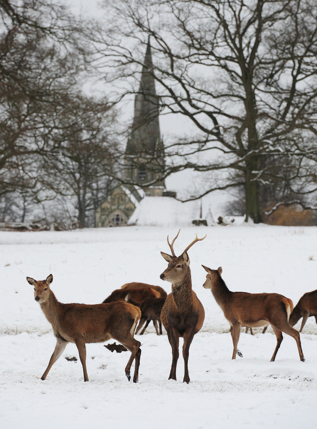 Deer at Studley Royal Park