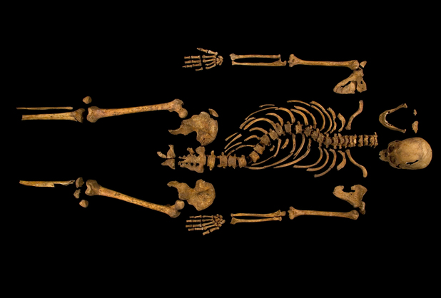 complete skeleton showing the curve of the spine, Richard III