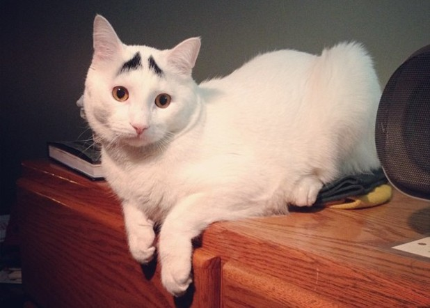 Sam the cat, who gained internet fame for having worried eyebrows