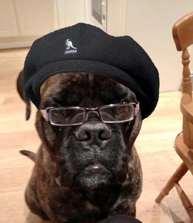 Dog that looks like Samuel L Jackson