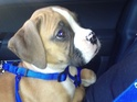 The couple's dog is reportedly named after famous boxer Bernard Hopkins.