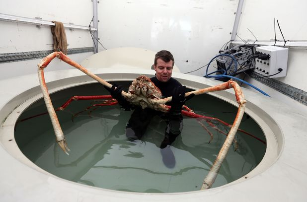 'Big Daddy' crab with 9ft claws arrives in Blackpool