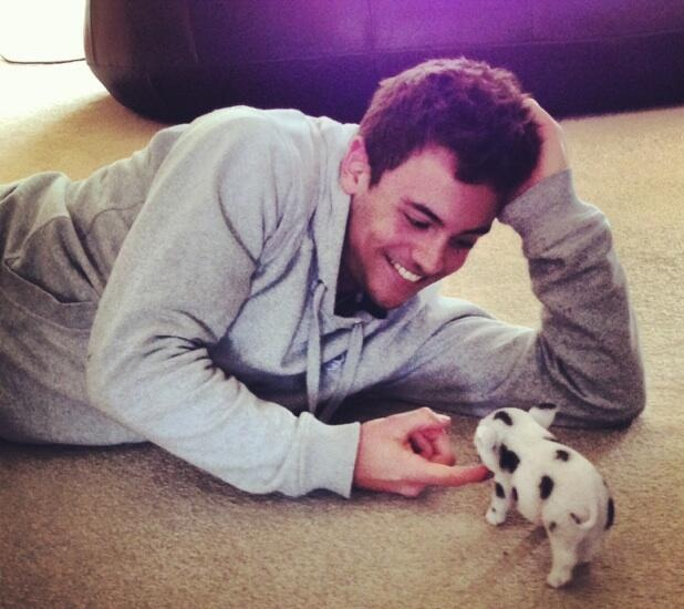 Tom Daley with his new micro pig