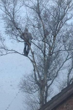 Man protests from up a tree in Leigh