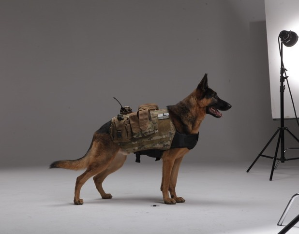 'Call of Duty: Ghosts' Dog photo