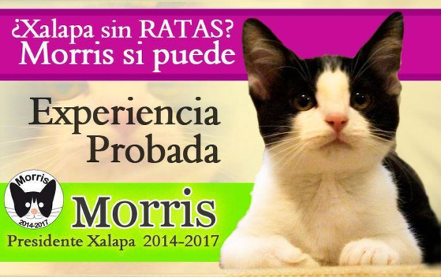 Advert for Morris the Cat in Xalapa