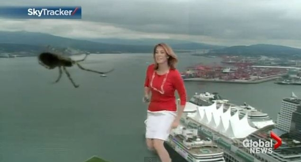 Spider attacks weather girl Kristi Gordon live on air