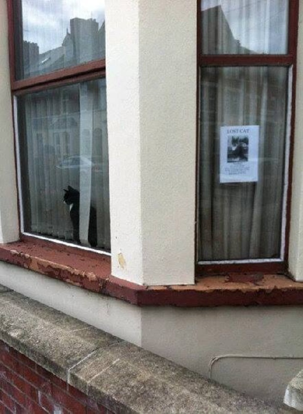 Lost cat seen next to missing poster