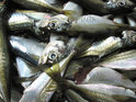 14 people arrested after police check frozen fish to find 325 kilos of drugs.