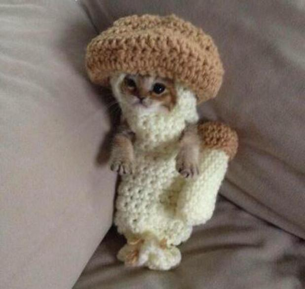 Kitten dressed up as a mushroom