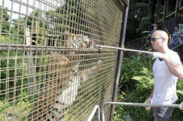 Max George at Welsh Mountain Zoo