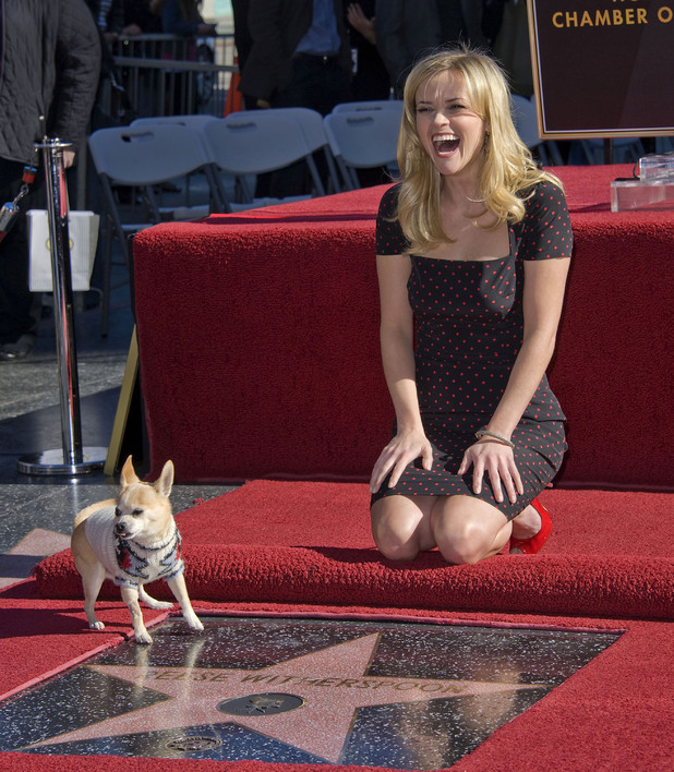 Reese Witherspoon, Reese Witherspoon and Bruiser the Chihuahua from Legally Blonde