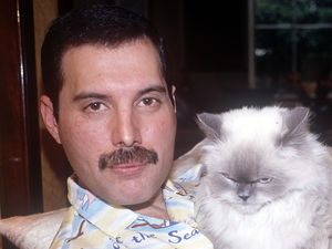 Freddie Mercury with his pet cat - 1988