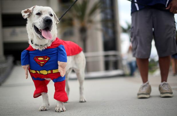 Beckham the Dog as Superman